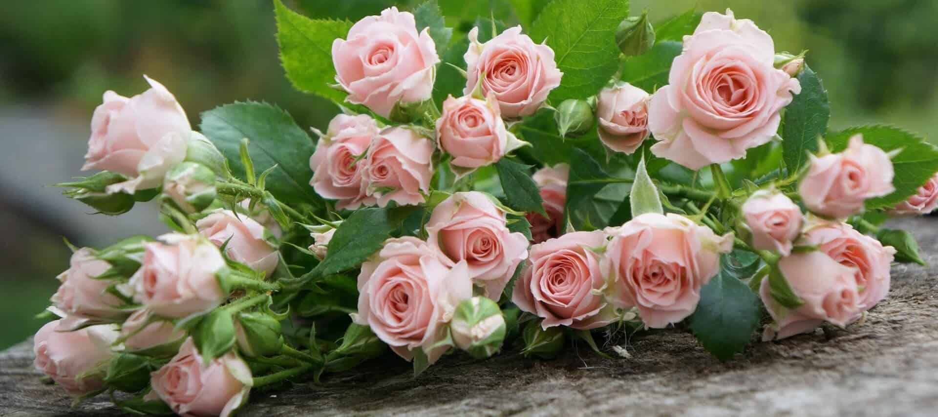 Bouquet of blush pink roses and bright green leaves