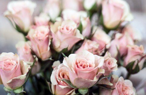 A bouquet of blush pink roses with green leaves